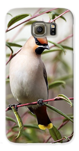 Waxwing Galaxy S6 Case