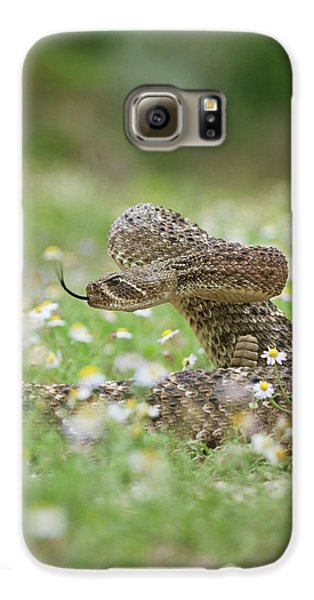 Western Diamondback Rattlesnake Galaxy S6 Case by Larry Ditto