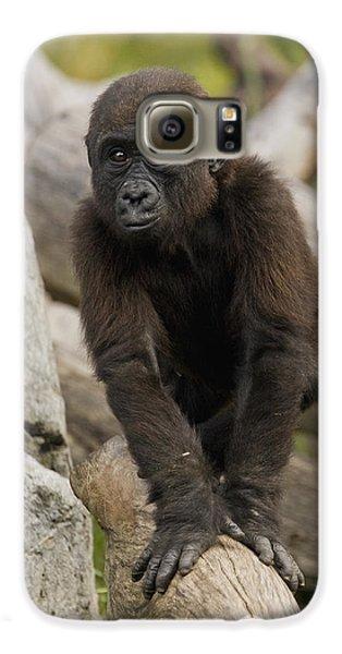 Western Lowland Gorilla Baby Galaxy S6 Case by San Diego Zoo