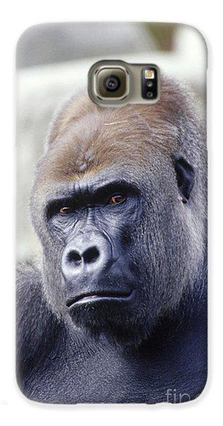 Western Lowland Gorilla Galaxy S6 Case by Gregory G. Dimijian