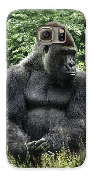 Western Lowland Gorilla Male Galaxy S6 Case by Konrad Wothe