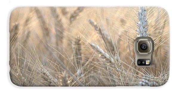 Beautiful Galaxy S6 Case - #wheat #france #rsa_ladies #rsa_nature by Georgia Fowler
