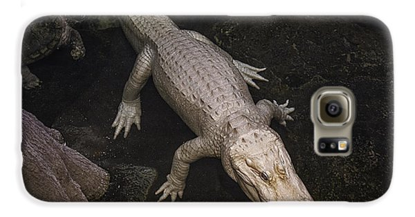 White Alligator Galaxy S6 Case