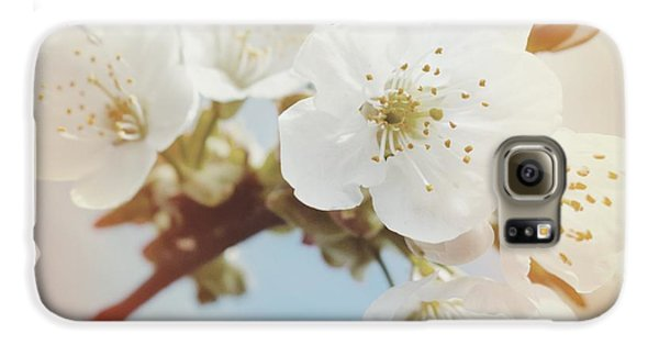 Detail Galaxy S6 Case - White Apple Blossom In Spring by Matthias Hauser