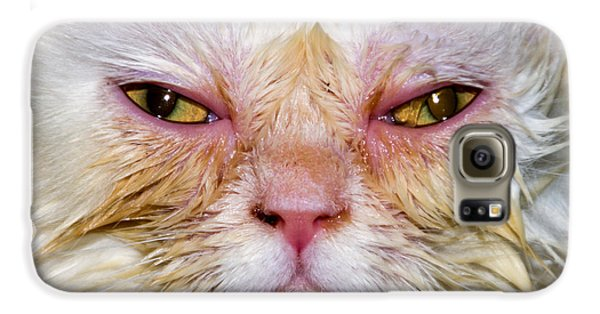 Scary White Cat Galaxy S6 Case