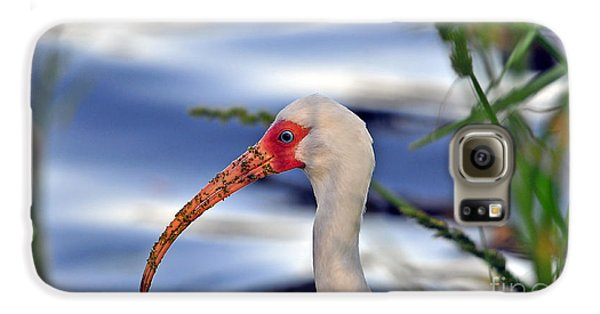 Intriguing Ibis Galaxy S6 Case by Al Powell Photography USA