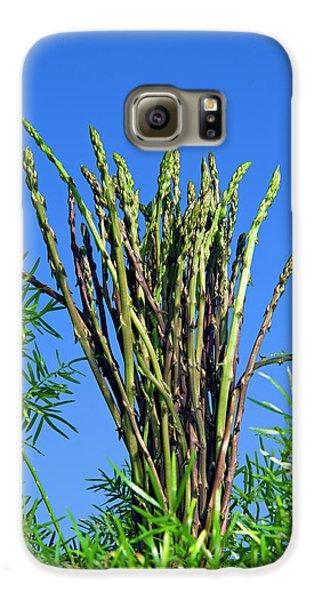 Wild Asparagus (asparagus Acutifolius Galaxy S6 Case by Nico Tondini