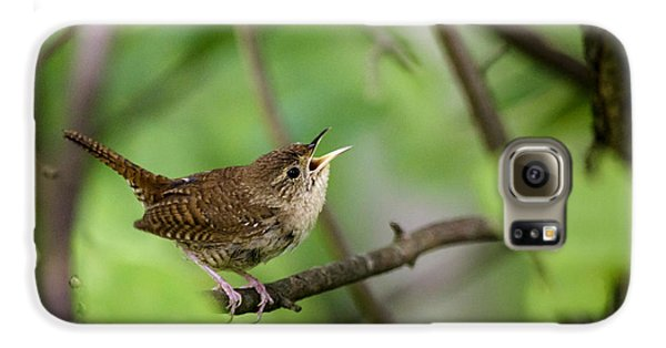 Wild Birds - House Wren Galaxy S6 Case by Christina Rollo