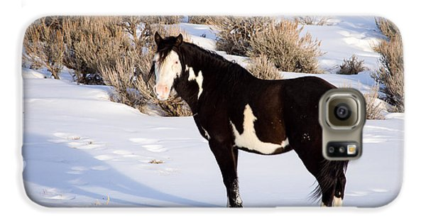 Wild Horse Stallion Galaxy S6 Case