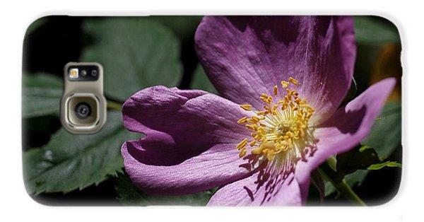 Wild Rose Galaxy S6 Case by Rona Black