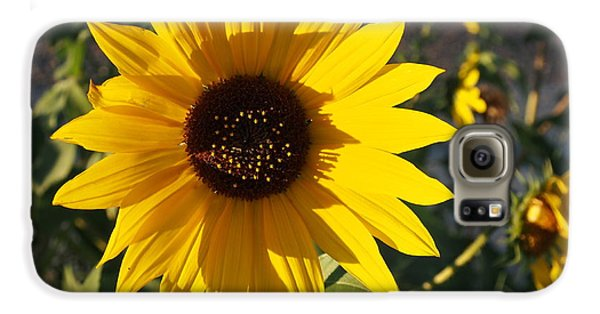 Wild Sunflower Galaxy S6 Case