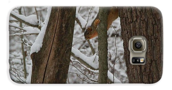 Winter Squirrel Galaxy S6 Case by Dan Sproul