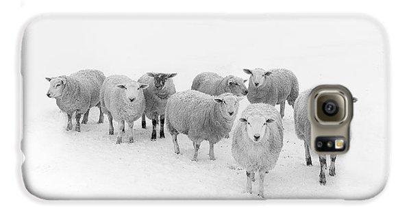 Sheep Galaxy S6 Case - Winter Woollies by Janet Burdon
