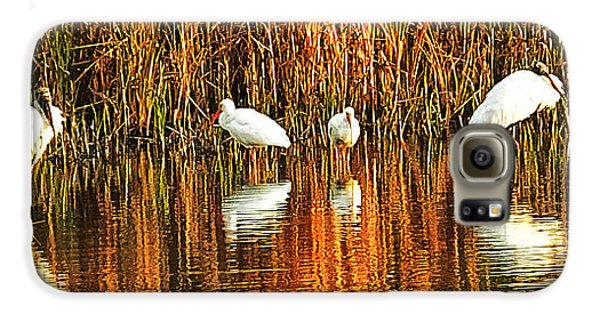 Wood Storks And 2 Ibis Galaxy S6 Case by Bill Barber