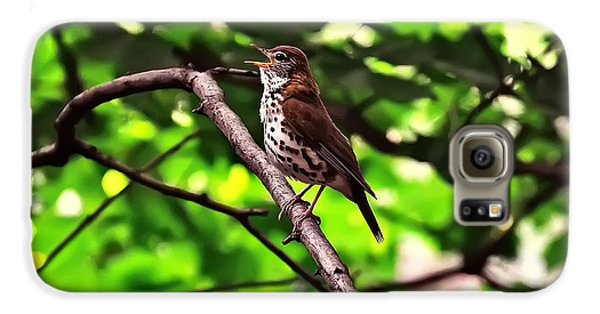 Wood Thrush Singing Galaxy S6 Case