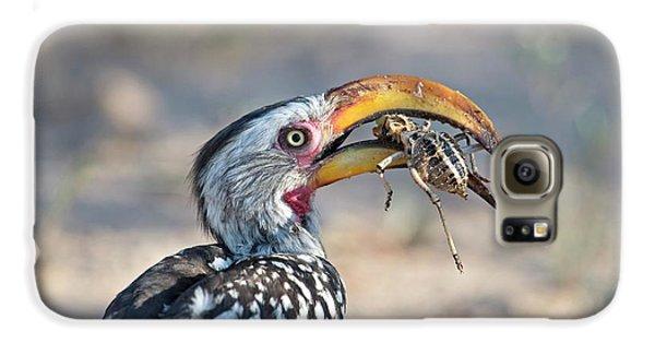 Hornbill Galaxy S6 Case - Yellow-billed Hornbill Eating A Cricket by Tony Camacho