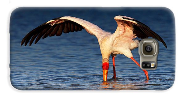 Yellow-billed Stork Hunting For Food Galaxy S6 Case