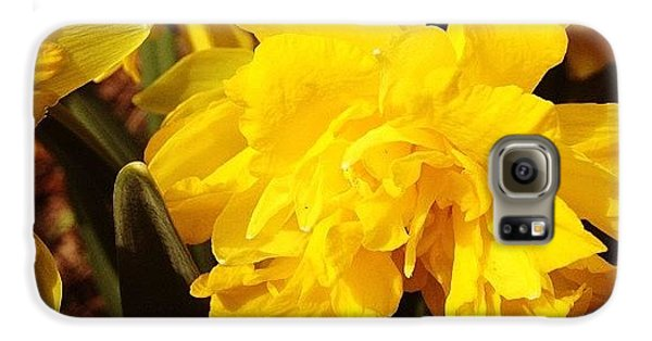 Bright Galaxy S6 Case - Yellow Daffodils by Christy Beckwith