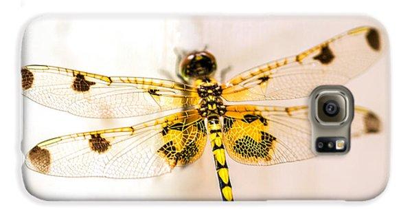 Dragon Galaxy S6 Case - Yellow Dragonfly Pantala Flavescens by Iris Richardson