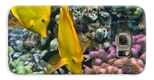 Yellow Tang Pair Galaxy S6 Case by Peggy Hughes