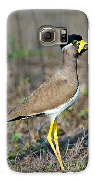 Yellow-wattled Lapwing Vanellus Galaxy S6 Case by Panoramic Images