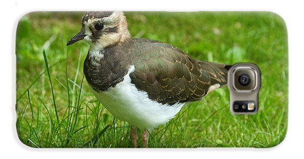 Lapwing Galaxy S6 Case - Young Lapwing by Helmut Pieper