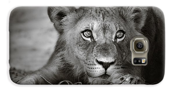 Lion Galaxy S6 Case - Young Lion Portrait by Johan Swanepoel