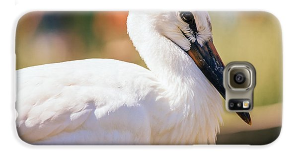 Young Stork Portrait Galaxy S6 Case by Pati Photography