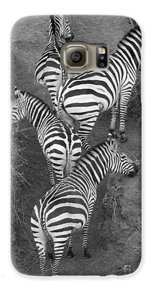 Zebra Design Galaxy S6 Case by Carol Walker