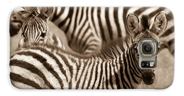 Zebra Stripes Galore Galaxy S6 Case