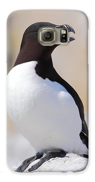 Razorbill Galaxy S6 Case by Bruce J Robinson