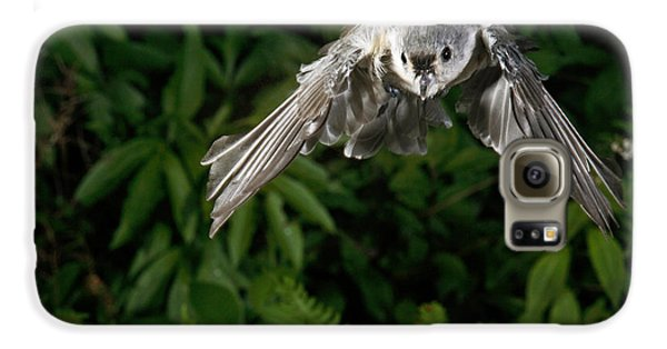 Tufted Titmouse In Flight Galaxy S6 Case