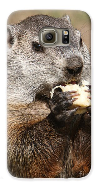 Animal - Woodchuck - Eating Galaxy S6 Case by Paul Ward