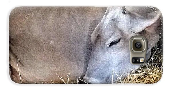 Ohio Galaxy S6 Case - Beautiful Brown Swiss by Natasha Marco