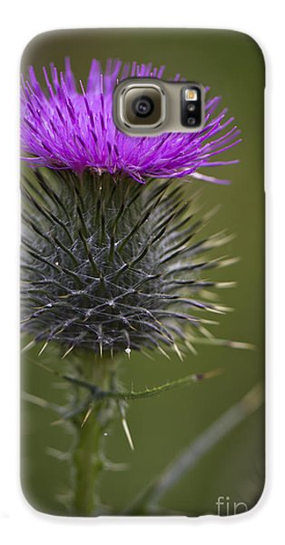 Blooming Thistle Galaxy S6 Case