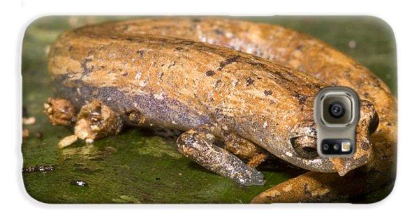 Bolitoglossine Salamander Galaxy S6 Case by Dante Fenolio
