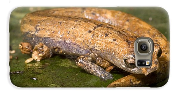 Bolitoglossine Salamander Galaxy S6 Case