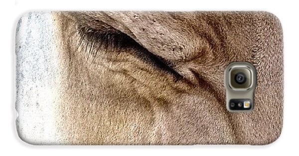 Ohio Galaxy S6 Case - Brown Swiss Cow by Natasha Marco