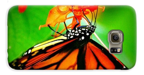 Colorful Galaxy S6 Case - #butterfly #pretty #colorful by Mandy Shupp