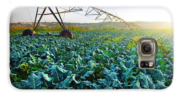 Cabbage Growth Galaxy S6 Case by Carlos Caetano