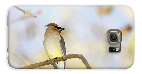 Cedar Waxwing On Yellow And Blue Galaxy S6 Case by Susan Gary