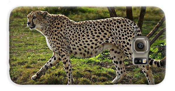 Cheetah  Galaxy S6 Case by Garry Gay