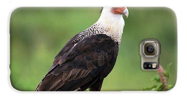 Crested Caracara Galaxy S6 Case