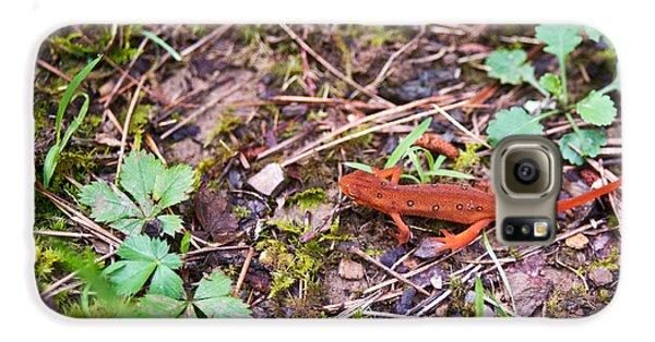 Newts Galaxy S6 Case - Eastern Newt Juvenile 2 by Douglas Barnett