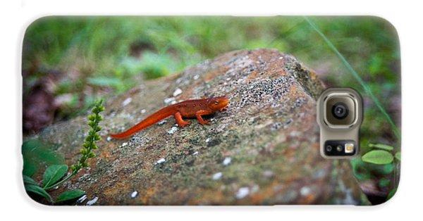 Newts Galaxy S6 Case - Eastern Newt Juvenile 7 by Douglas Barnett