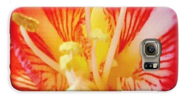 Decorative Galaxy S6 Case - Flower by Tom Crask