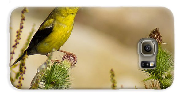 Goldfinch On Lookout Galaxy S6 Case
