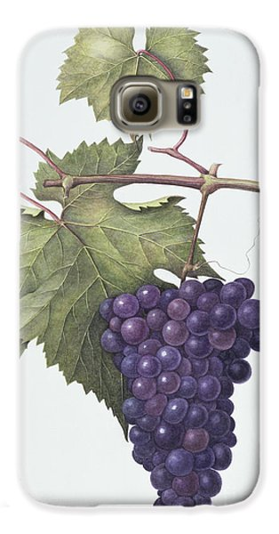 Grapes  Galaxy S6 Case by Margaret Ann Eden