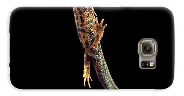 Great Crested Newt Galaxy S6 Case by Andy Harmer