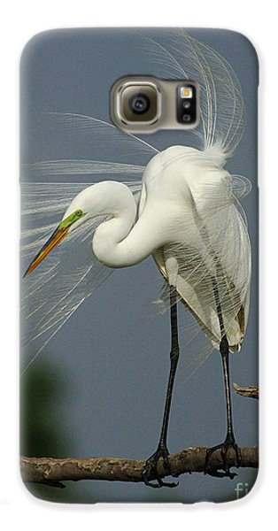 Great Egret Galaxy S6 Case by Bob Christopher